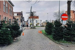 Kerstbomen in Haarlem